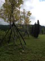 photo 2 (4)