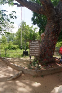 This is a tree where children were killed in front of their mothers.