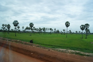 One of the many gorgeous fields on the way to Siem Riep.